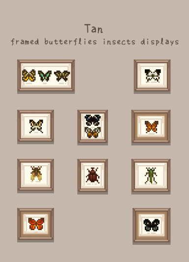 tan framed butterflies insect display