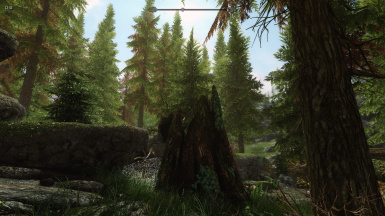 Riverwood_overhaul_forest
