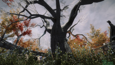 5  TUCOGUIDE and NATURAL VIEW TAMRIEL ENB