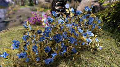 Mountain flower by mari se at skyrim special edition nexus mods mountain flower by mari 1 2 mightylinksfo