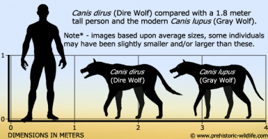 canis dirus dire wolf size