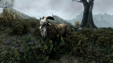 Dragontail Goat