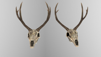 Deer Skull Horns Static Before After