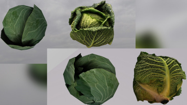 Cabbage Before After