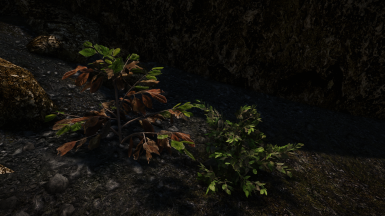 Skyrim 3D Trees and Plants at Skyrim Special Edition Nexus