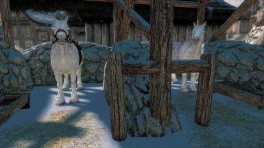 The new white horse breed available at Winterhold
