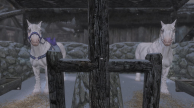 Horses with The Real Frost mod installed