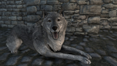 New Bellyache Texture for Companion wolf Secunda