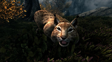 Lynxes Cheetahs and Smilodon- Mihail Monsters and Animals(sse) (mihail immersive add-ons - megafauna)