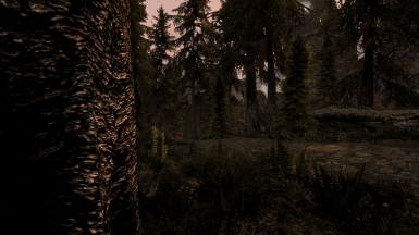SFO, Dark Forests of Skyrim, Northern Grass and NAT