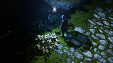 ENB Light with Torches Cast Shadows