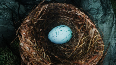 Rock Warbler Nest and Egg.