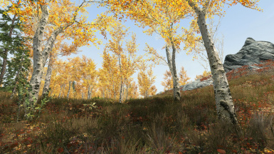 Skyrim VR Realistic Forests and Lighting Guide