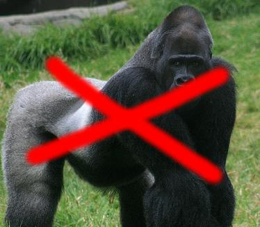 No more Gorillas