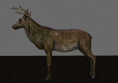 Vannila Female Elk