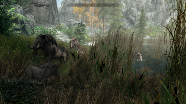Boars at the water point only the morning