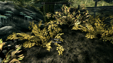 Frost Mirriam and Elves Ear harvestable bushes