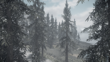 Light snowy - forest