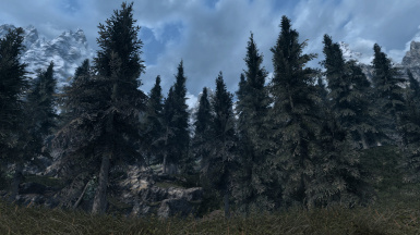The most beautiful pine textures out there!
