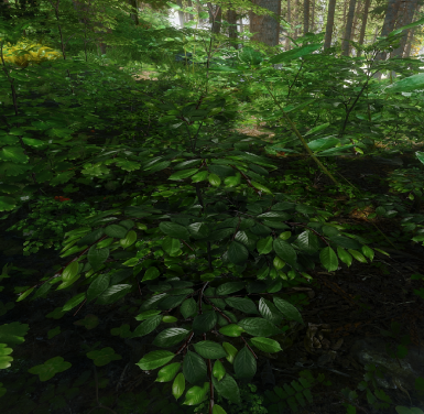 Origins Of Forest - 3D Forest Grass