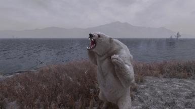 Bears are scary now.