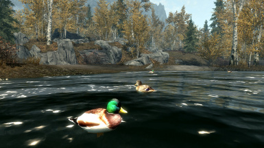 Ducks and Swans Resource