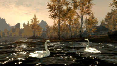 Ducks and Swans for Skyrim SE