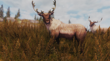 K ENB Pure Light Special Edition WIP