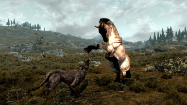A Stallion Defends His Herd