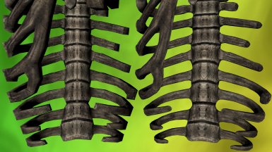Mammoth Ribcage Broken Before After