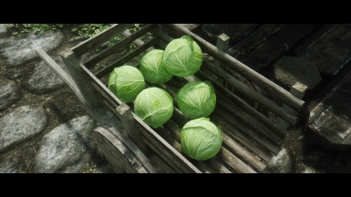 Embrace cabbage