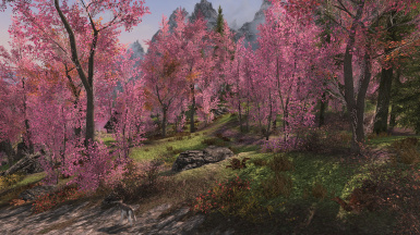 Aspens to Cherry Blossoms SSE