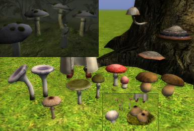 Mushrooms pack