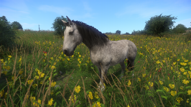 All the pretty horses reloaded