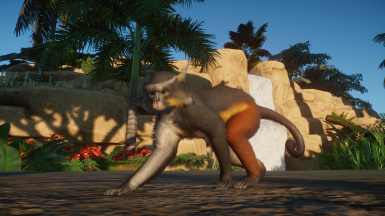 Wolf's Guenon Monkey (Updated for 1.4)