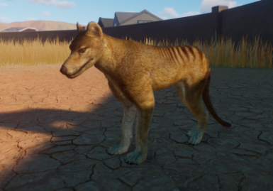 Thylacine - Updated for South East Asia Update