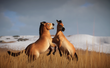 PureWinter  Przewalski's horse - Updated for South East Asia