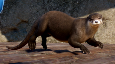 North American River Otter - New Species (Updated for 1.6)