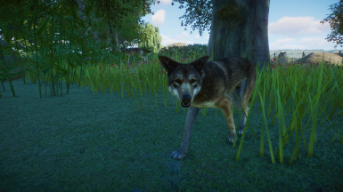 (Updated for 1.6) Red Wolf-New Species