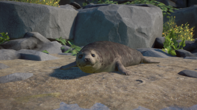 Harbor Seal - New Species (Fixed for 1.5)