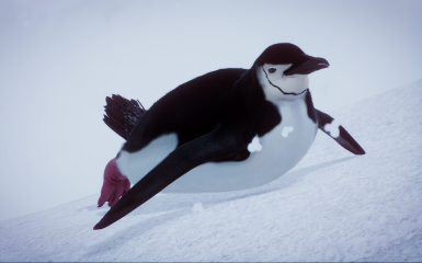 (1.5) New Species - Chinstrap Penguin