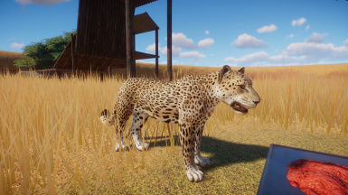 African Leopard - New Species Replacement