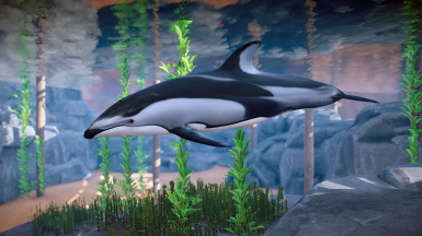 Pacific White-Sided Dolphin - New Species (1.5)