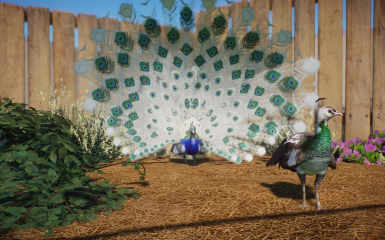 (1.5) New Species - Pied Indian Blue Peafowl