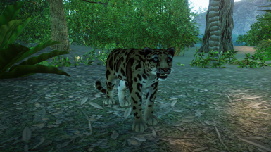 Clouded Leopard (Updated for 1.4)