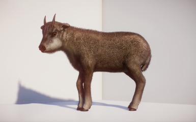 (1.6) New Species - Long-Tailed Goral