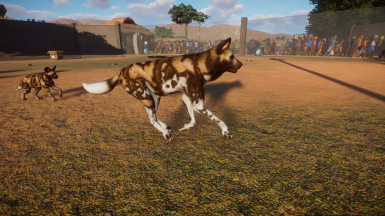 African Wild Dog Texture re-paint