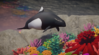 Dall's Porpoise - New Species (1.6)