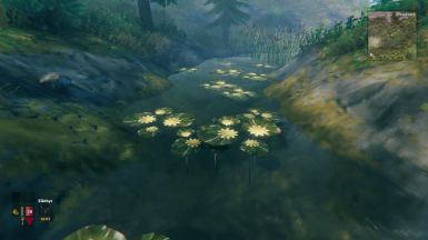 Water Lilies Collections