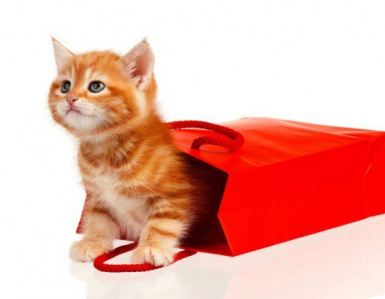Shopping - Let the Cats out of the Bag